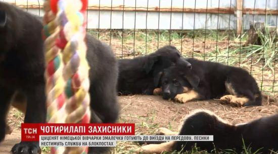 На Дніпропетровщині коп урятував песика, якому не давали шансів на життя