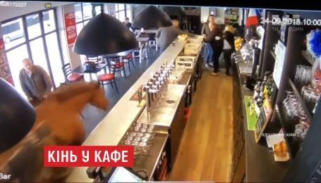 Во французском городе Шантийи лошадь внезапно заскочила в кафе и напугала посетителей