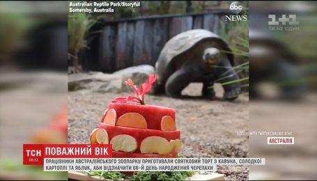В зоопарке Австралии отметили 68-летие слоновой черепахи