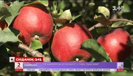 В Україні зібрали рекордний врожай яблук
