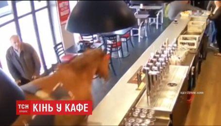 Лошадь внезапно заскочила в кафе во Франции