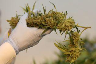 У Новій Зеландії дозволили вживати медичну марихуану