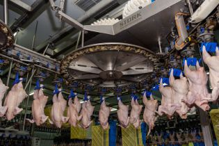 """Отруєна вода на Черкащині: селяни """"грішать"""" на місцевих виробників курятини"""
