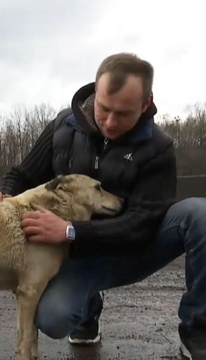 Пес, которого хозяева оставили в завязанном мешке, выбрал себе новый дом