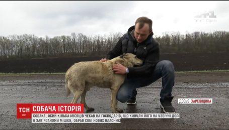 Пес, якого господарі покинули у зав'язаному мішку, обрав собі новий дім