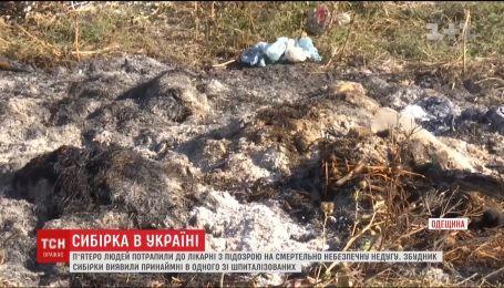 Сибірка в Україні: п'ятеро жителів Одещини шпиталізовані з підозрою на небезпечну недугу