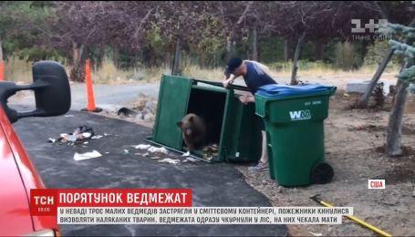 В Неваде трое медвежат застряли в мусорном контейнере