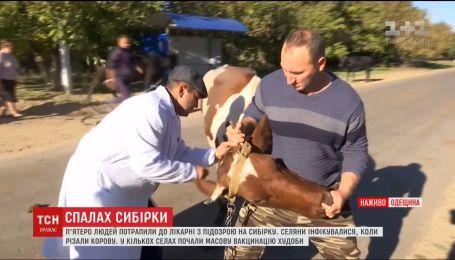Поблизу села на Одещині, де зафіксували спалах сибірки, проводять масову вакцинацію худоби