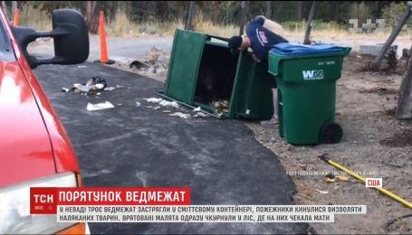 У США врятували трьох ведмежат, які застрягли у смітнику