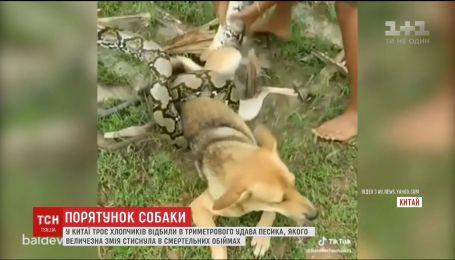 В Китае трое детей отбили свою собаку в удава