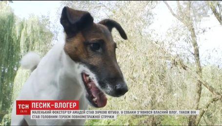 Актор, влогер, спортсмен, танцюрист та благодійник. Як фокстер'єр став найвідомішим собакою в країні