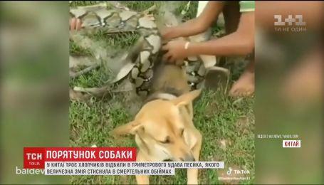 Спасение от смертельных объятий. В Китае дети отбили собаку в удава
