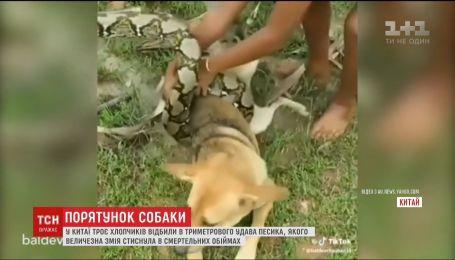 В Китае трое детей спасли собаку от удушения удава