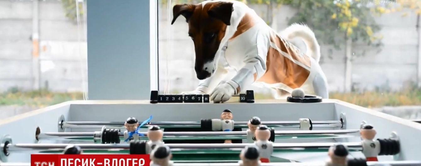 """""""Порода своенравная"""": самый известный пес Украины """"открыл"""" собственный канал на YouTube"""