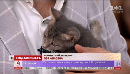 Кошеня на ім'я Малюк шукає дім