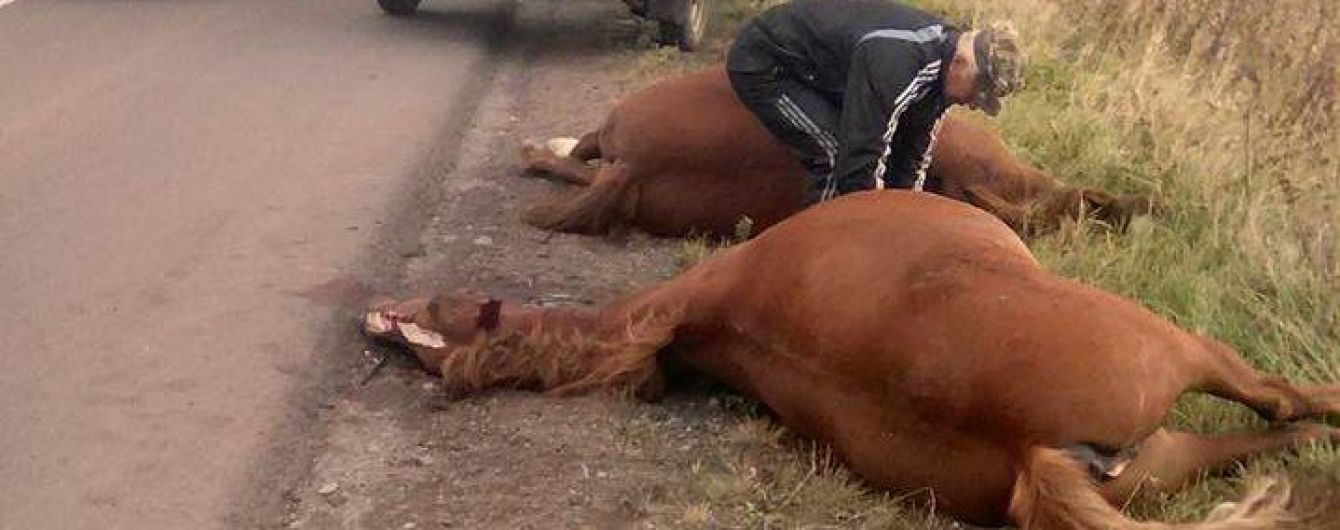 В Львовской области водитель задавил бусом двух лошадей