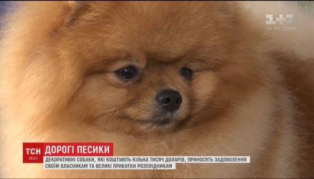 Величезний клопіт маленьких цуциків коштує українцям цілого статку