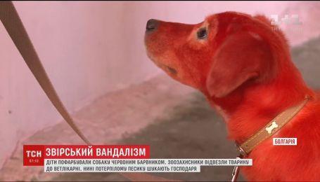 Звірські знущання. У Болгарії діти пофарбували червоним барвником бездомного собаку