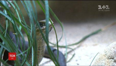 У Празі шукають отруйну змію, яка вкусила свою власницю та втекла з квартири у багатоповерхівці