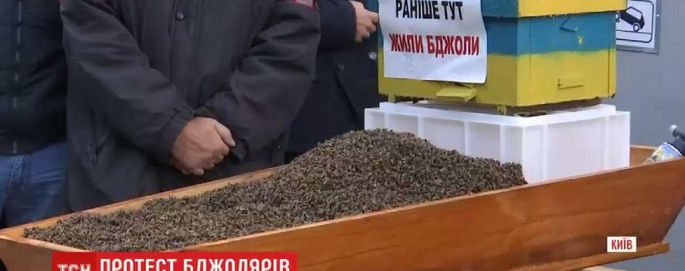 Под Кабмин принесли гроб с мертвыми пчелами