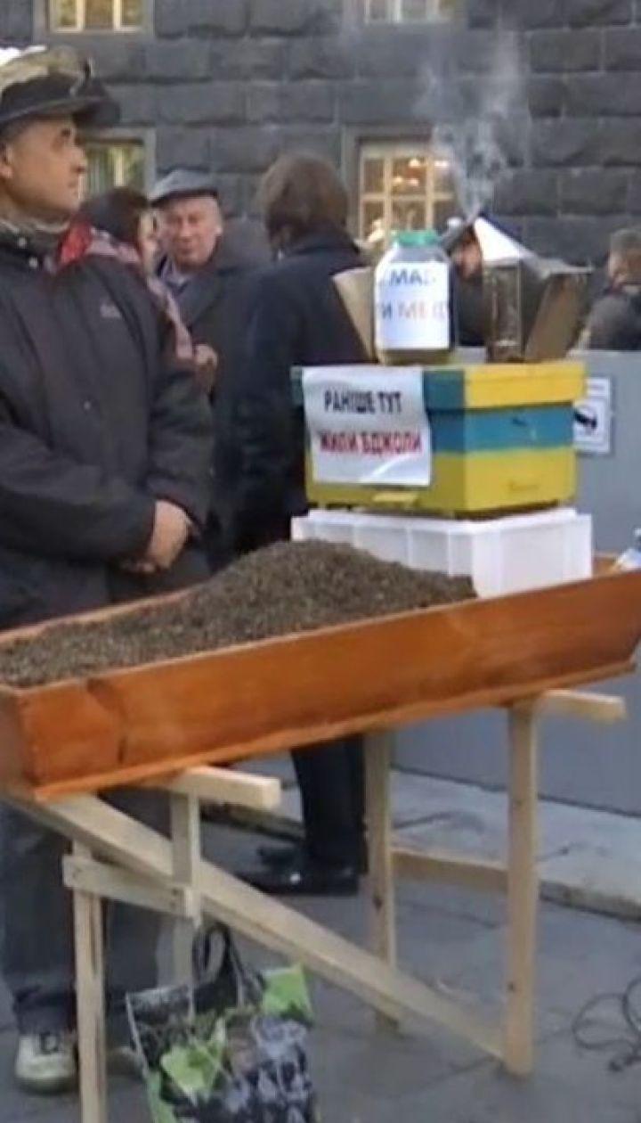 На мітинг до Кабміну люди вийшли через масову загибель бджіл