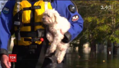 Собаку, который выжил в затопленном по потолок доме, спасли в Северной Каролине