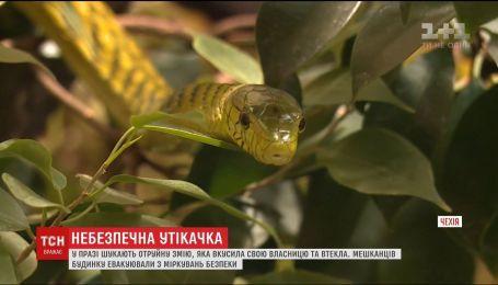 Ядовитая змея укусила свою хозяйку и сбежала из квартиры в многоэтажке в Праге