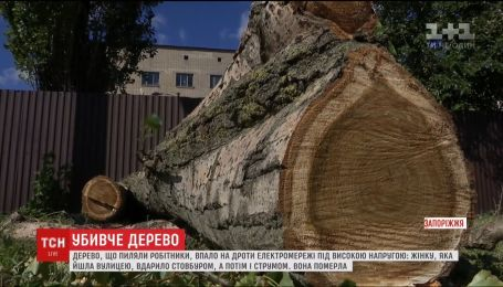 В Запорожье тополь убил случайную прохожую