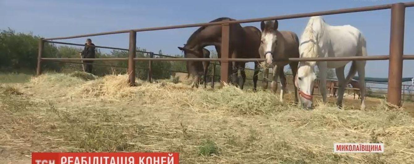 Приют для лошадей, которых хозяева хотели сдать на мясокомбинат, устроили на Николаевщине