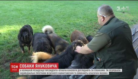У Межигір'ї кінологи доглядають за собаками президента-втікача