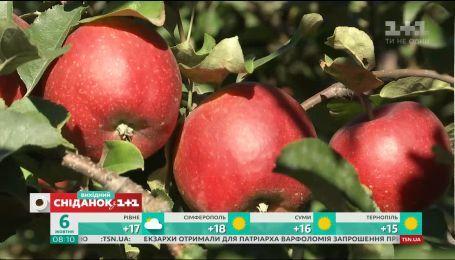 Чому варто купувати яблука саме зараз і як отримати від них максимальну користь