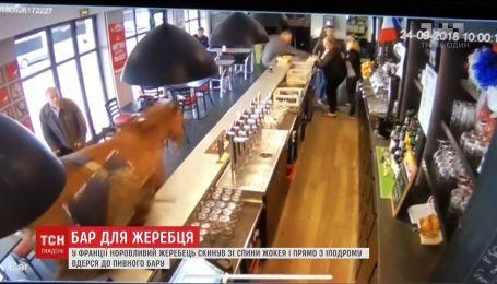 Во Франции жеребец сбросил со спины жокея и ворвался в пивной бар