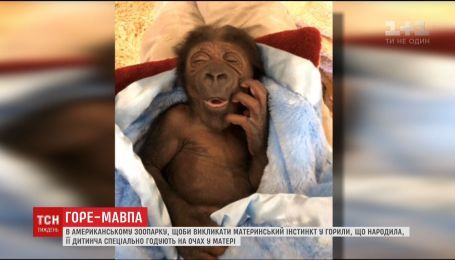 В американському зоопарку 22-річна горила покинула своє дитинча напризволяще