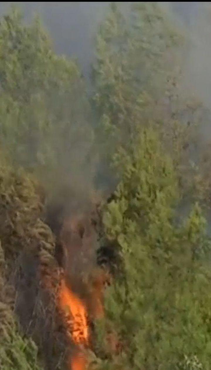 Поблизу Лісабона зайнялась масштабна лісова пожежа