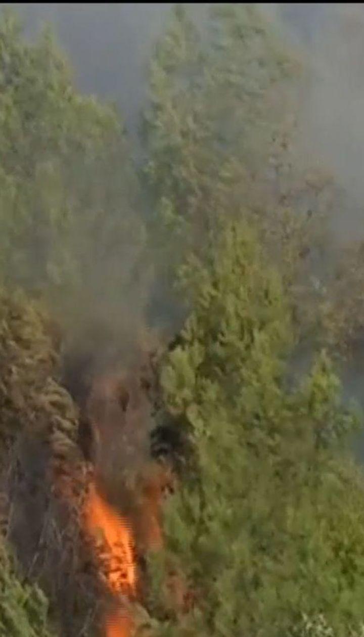 Возле Лиссабона занялся масштабный лесной пожар