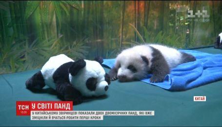 В китайском зоопарке показали двухмесячных панд