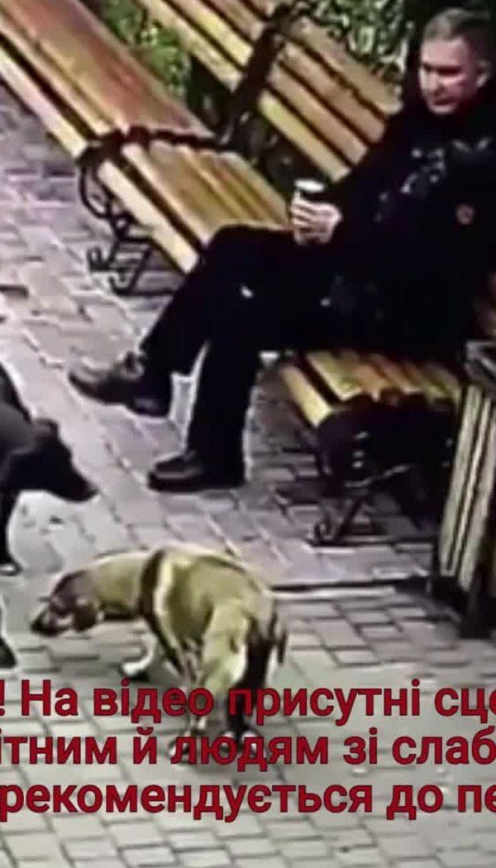 Жителів Хмельницького обурило жорстоке отруєння собак директором притулку