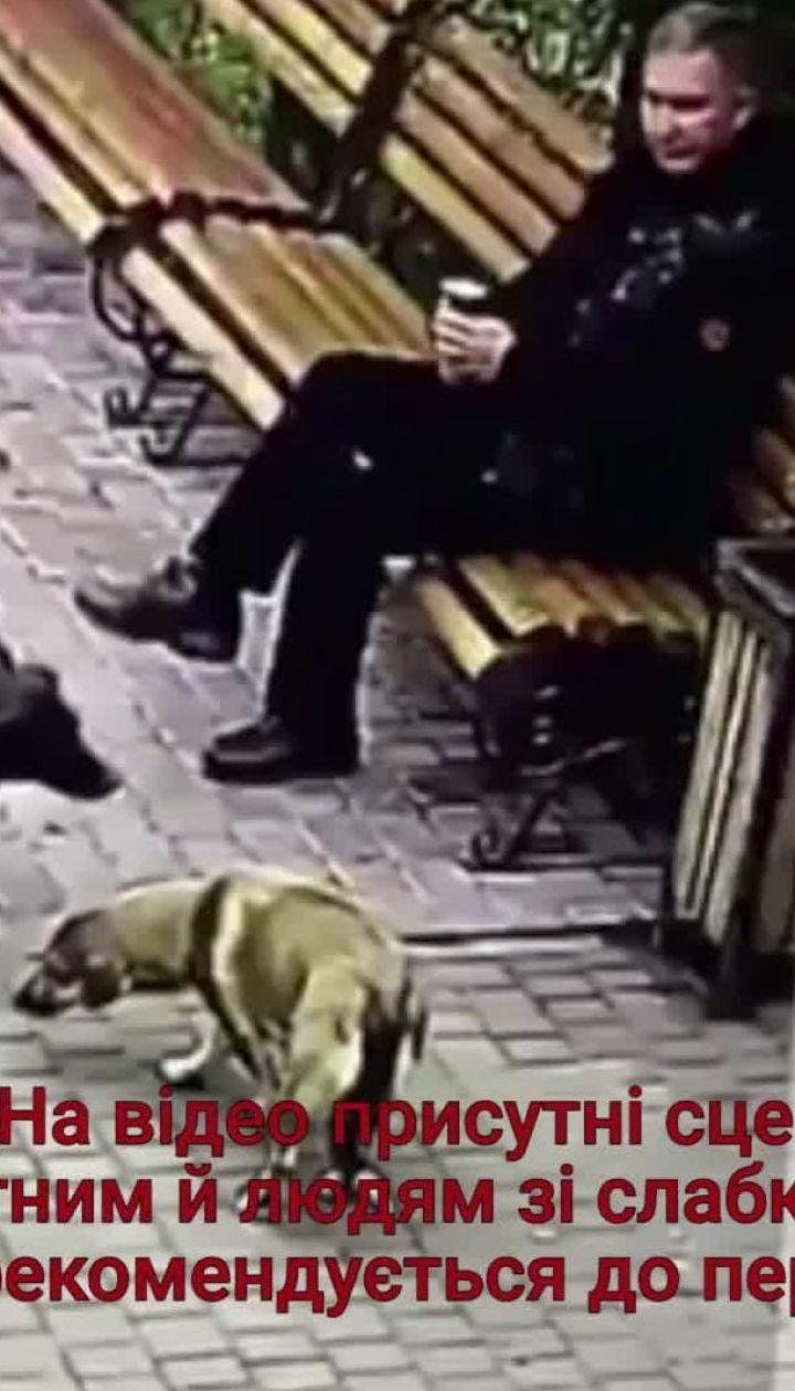 Жителей Хмельницкого возмутило жестокое отравление собак директором приюта