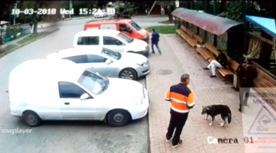 Скандальні догхантери у Хмельницькому за п'ять років могли отруїти 200 собак