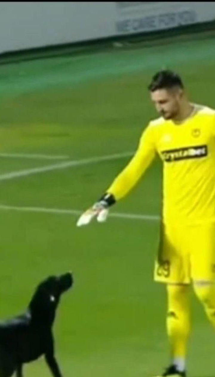 У Грузії безпритульний пес зупинив матч Національної футбольної ліги