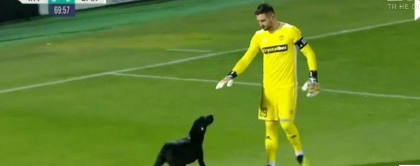Бездомный пес остановил матч в Грузии и поигрался с футболистами