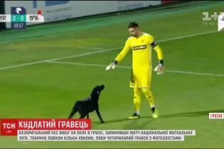 Безпритульний пес зупинив матч у Грузії і погрався з футболістами