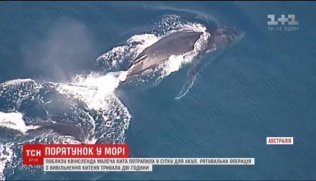 Вблизи Квинсленда спасатели освободили детеныша кита, который попал в сеть для акул