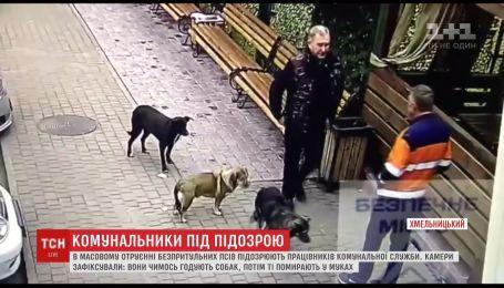 В Хмельницком коммунальщиков подозревают в массовом отравлении бездомных собак