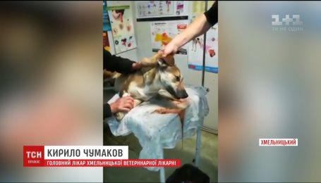 Працівників комунальної служби підозрюють в отруєнні безпритульних собак