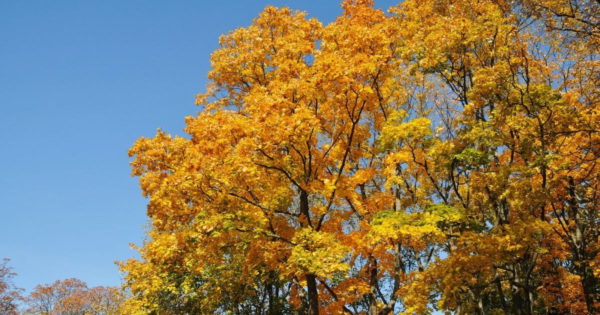 Осінь у Чернігові