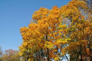 Тепло и солнечно. Какая погода ждет украинцев 14 октября