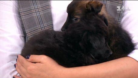 Пятеро крошечных щенков ищут новых хозяев