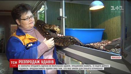 Николаевский зоопарк предлагает людям купить детенышей змеи