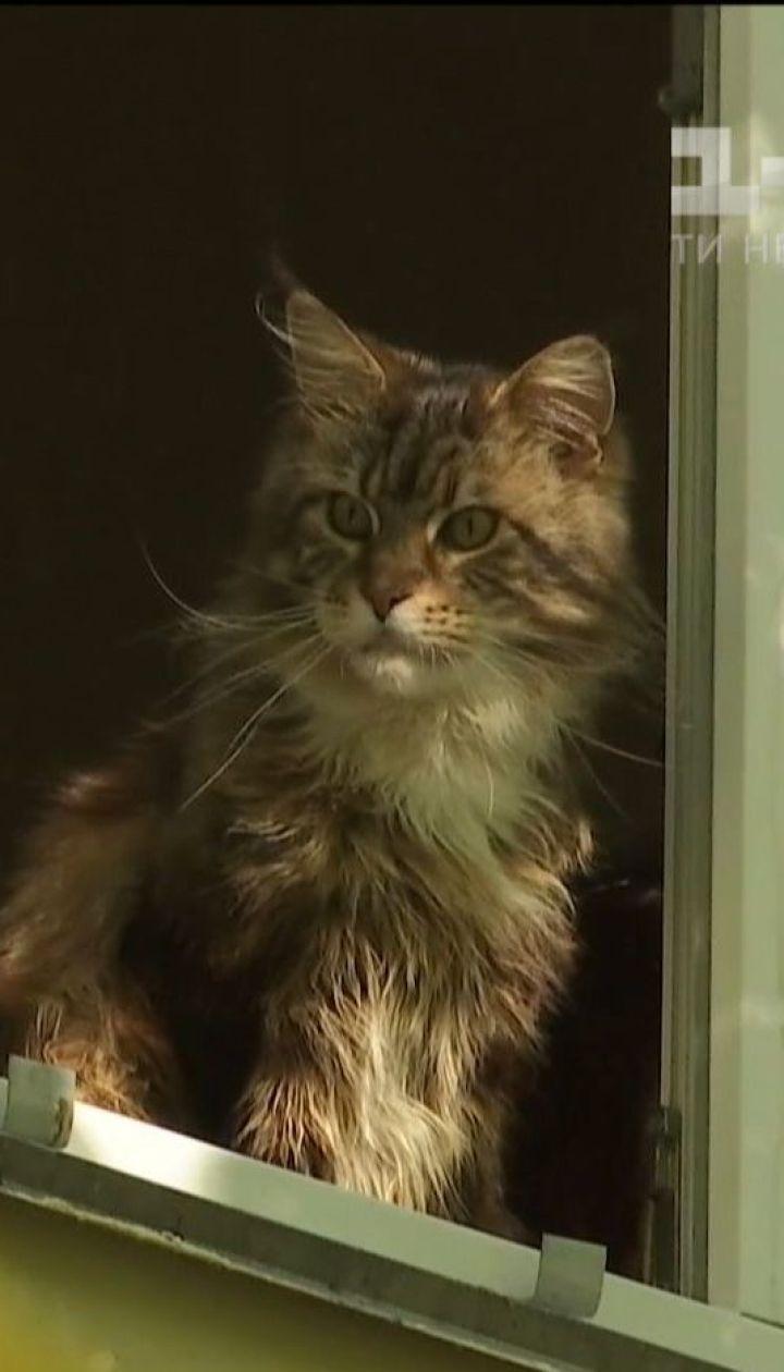 У Києві невідомий катує та вбиває котів
